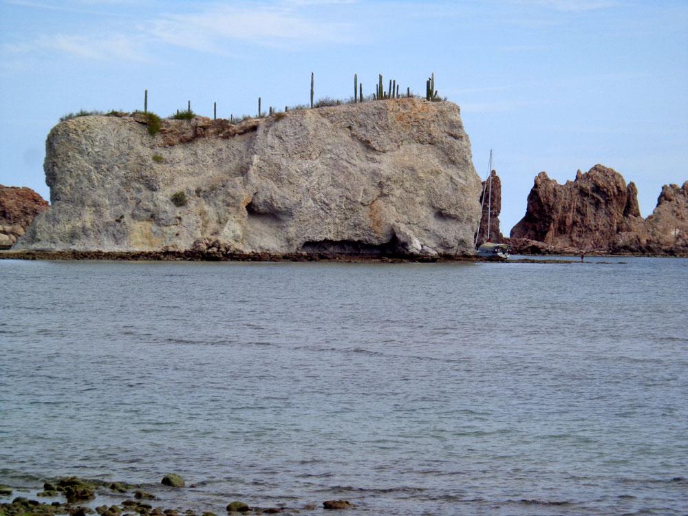 Cactus-island.jpg