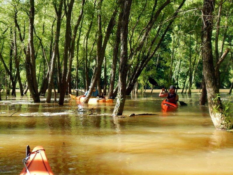 wfk-forest-1638.thumb.jpg.295335492311f45486c17cbade376aa3.jpg