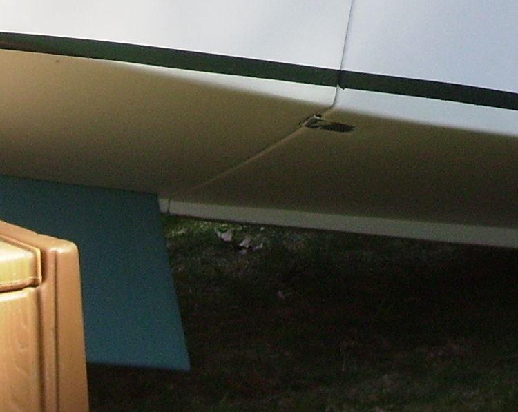 Copy(2) - Winge in yard 019.jpg.jpg